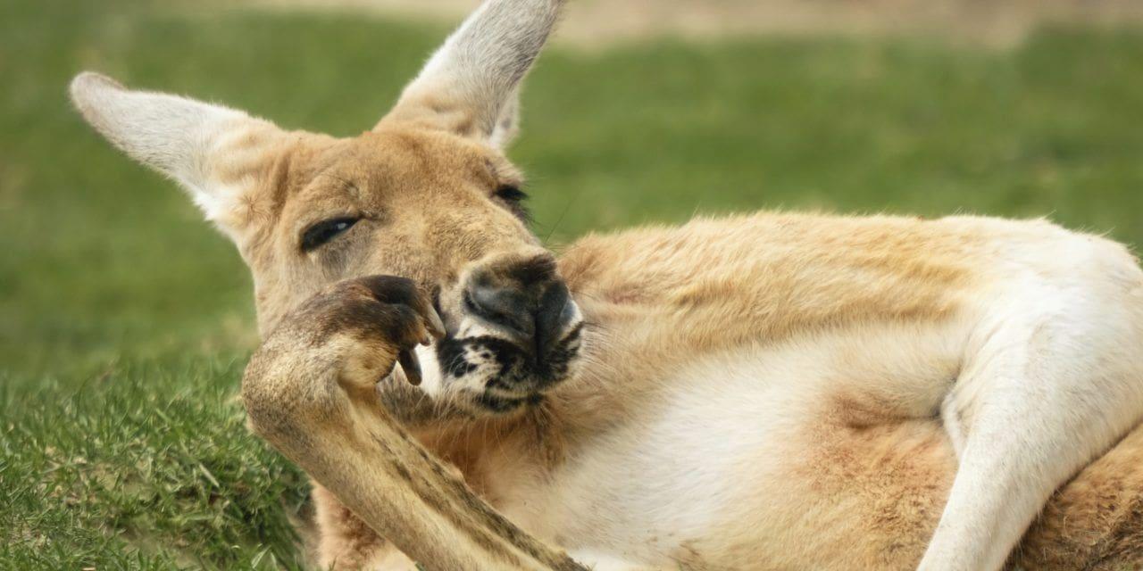 Sabías que?… Australia – datos interesantes de Australia